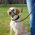 Намордник для собак Trixie Top Trainer M