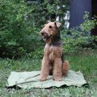 Охлаждающий коврик для собак Osso Fashion L, размер 75х100см.